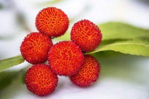 Frutas de Otoño: Madroños